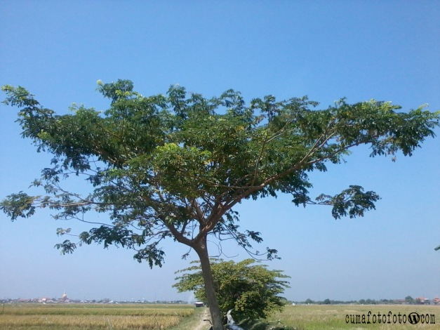Pohon gak jelas